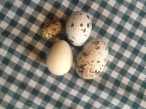 2013-10-16 - 3 g 12 g and 23 g Quail Eggs