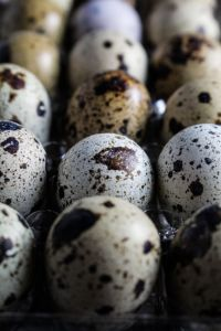 2014-04-19 - Quail Eggs Storage