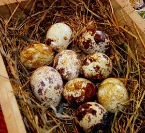 2014-04-05 - Quail Eggs 1