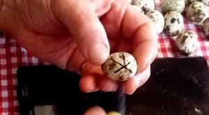 2014-02-16 - Egg circle 3