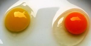 2014-02-17 - Eggs Quality 3
