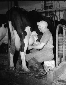 2014-05-30 - Milk Cow