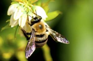 2014-07-29 - Bee Research