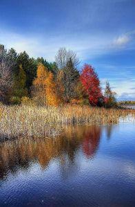 2014-08-04 -  Wetlands