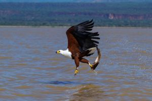 2014-09-06 - 1300 Birds Species face extinction