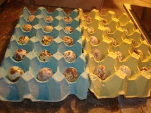 2014-11-22 - Broken Eggs Salama 7