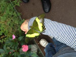 2014-11-23 - Butterfly