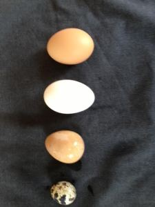 2014-12-17 - Four Eggs 2