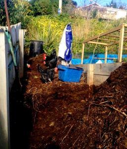 2015-08-10 - Aerate Compost 3