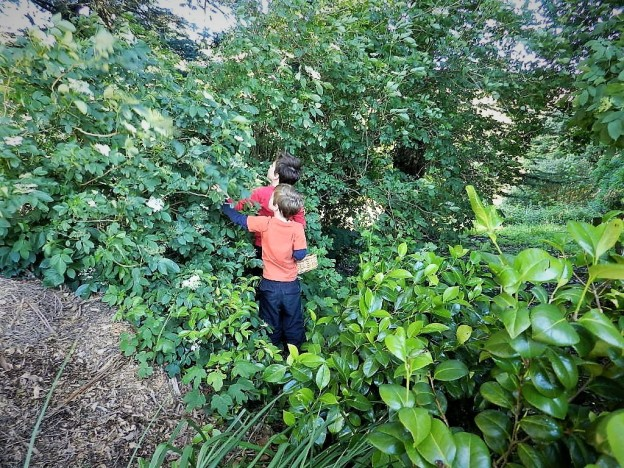 2018-12-24 - Elderberry Harvesting Team